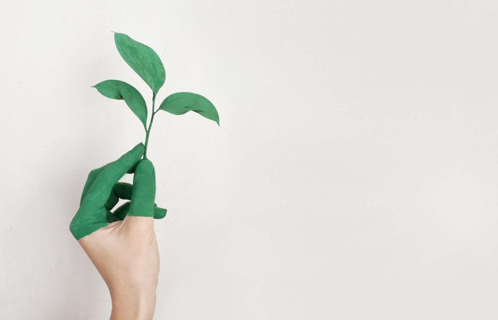 5 простых идей для экологичного дома и стиля жизни